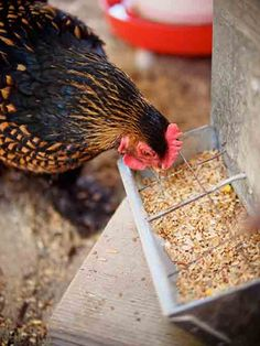 How To Make Organic Chicken Feed