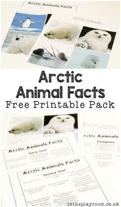 free printable pack of polar animals factfiles and images