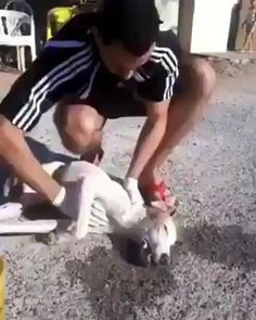 Cute Little Animals, Cute Funny Animals, Animal Tv, Video Humour, Human Kindness, Cute Stories, Cute Animal Videos, Funny Short Videos, Cute Dogs And Puppies
