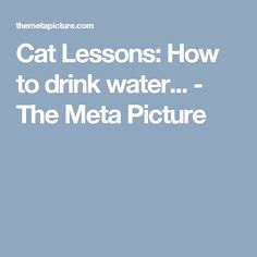 Cat Lessons: How to drink water... - The Meta Picture