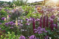 A look at Arne Maynard's signature palette of purples and plums. Lupin, allium, and bronze fennel with spikes of verbascum blow in the breezes.