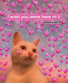 Cute Cat Memes, Cute Love Memes, Funny Memes, Flirty Memes, Wholesome Pictures, Snapchat Stickers, Crush Memes, Boyfriend Memes, Funny Reaction Pictures