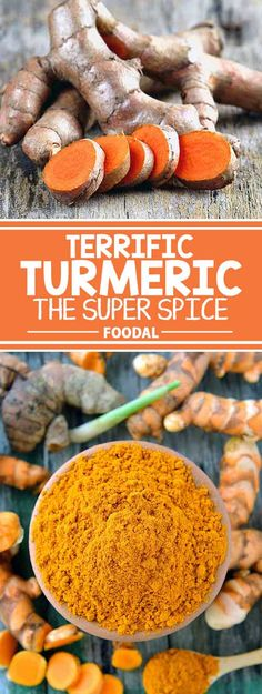 We know that herbs and spices contain some of the highest levels of antioxidants that promote good health. And turmeric is right up there with the best, thanks to its active ingredient, curcumin. Find out how you can easily add more of this super spice to your diet – read more now on Foodal.