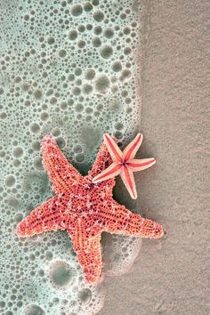 Starfish in the surf. Siesta Key, Florida on We Heart It Wallpaper Praia, Ocean Wallpaper, Wallpaper Backgrounds, Iphone Wallpaper, View Wallpaper, Photo Wall Collage, Picture Wall, Strand Wallpaper, Whatsapp Wallpaper