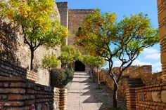 Lovely orange trees in the sun in the fortification Alcazaba, Malaga, Spain. The photo is under Creative Commons license, use it as you will, just give credit :-) Nerja, Sierra Nevada, Monuments, Malaga Beach, Bar Scene, 100 Things To Do, Spanish Wine, Fortification, Moorish