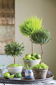 Garden Plans Topiary Containers - Tap The Link Now For More Awesome Fun and Function products for Your House.Garden Plans Topiary Containers - Tap The Link Now For More Awesome Fun and Function products for Your House Topiary Plants, Topiary Garden, Garden Pots, Planters, Topiary Decor, Boxwood Topiary, Topiary Trees, Balcony Garden, Decoration Plante