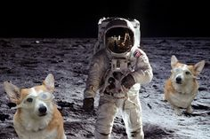 CORGIS IN SPACE!  My new favorite Tumblr page.