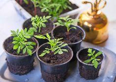 Maitopurkit, muovirasiat ja muovipullot muuntuvat kätevästi taimien kasvatusastioiksi. Katso ohjeet Viherpihasta ja onnistu!