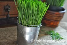 Artful Homemaking: Growing Wheat Grass {For Decoration}
