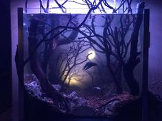 Aquarium Garden, Betta Aquarium, Freshwater Aquarium Fish, Planted Betta Tank, Betta Fish Tank, Fish Tank Themes, Fish Aquarium Decorations, Fish Tank Design, Saltwater Tank