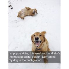 26 Dog Pictures So Funny, We Dare You Not To Laugh