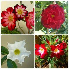 Flores do meu jardim!♥