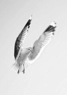 'Seagull' by Niyazi GENCA on artflakes.com as poster or art print $16.63