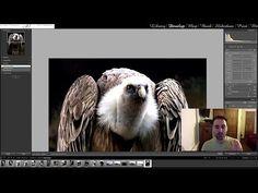 Lightroom 4 - Comment injecter de la vie grâce à la Brosse d'Ajustement - YouTube