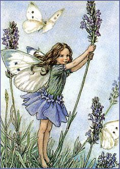 The Lavender Fairy (by Cicely Mary Barker ***)