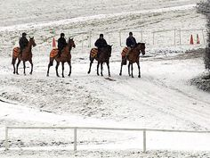 Winter's morning on the gallops