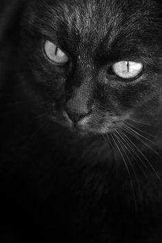 blackasmoonlessnightbywolfminori