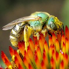 Pollinators ♥ Native Plants Pt.1   from network-green.org
