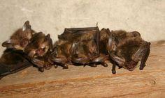 IVN: Vleermuizen, detector op scherp