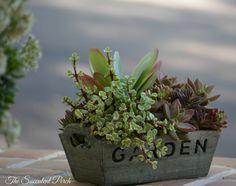 Succulent Garden www.thesucculentperch.com