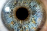 New Body Part! Layer in Human Eye Discovered