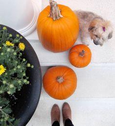 My Weekend Lookbook: October 19-20, 2013: Pumpkins & Mums & Front Porch Steps // porch styling // fall decor