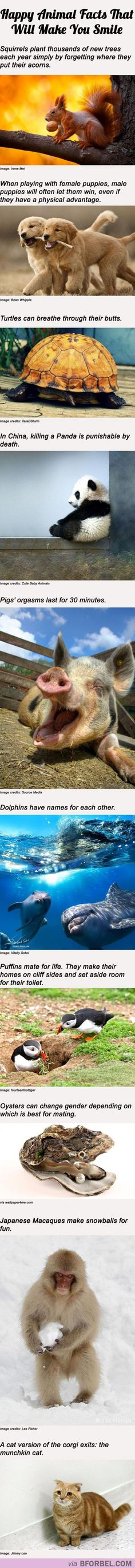 10 Happy Animal Facts That Will Make You Smile…