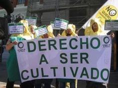 Mazorcas ecológicas reivindican su derecho a ser cultivadas en España
