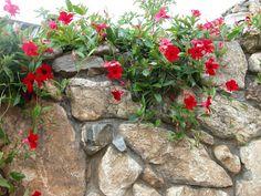 M s de 1000 im genes sobre plantas de exterior en - Plantas exterior todo el ano ...