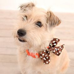 I love pets in bowties!