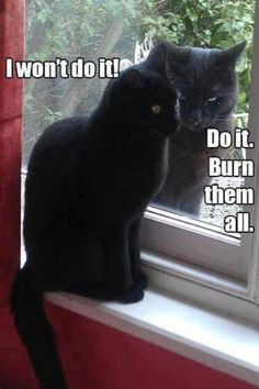 Are you looking for really funny black cat memes? Look no further, we've gathered funny black cat memes just for you to share on your social media accounts Cute Animal Memes, Funny Animal Quotes, Animal Jokes, Cute Funny Animals, Cute Cats, Animal Captions, Cat Sayings, Adorable Kittens, Funny Cat Memes