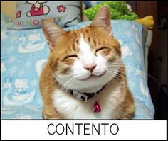 Gatos y emociones. MI COLE AL DIA: Resultados de la búsqueda de gatos
