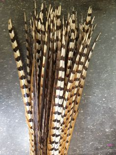 "40 - 45"" Reeves Pheasant Feather- Per Piece"
