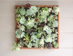 Top 12 Succulent DIY Projects -