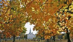 Leaves ripe for a fall as foliage peaks in southeastern Mass. Quincy, MA - The Patriot Ledger