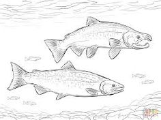Best Coloring: Salmon life cycle for kids coloring pages - Amazing Coloring sheets - Ocean Coloring Pages, Free Kids Coloring Pages, Fish Coloring Page, Free Printable Coloring Pages, Coloring Pages For Kids, Coloring Sheets, Adult Coloring, Salmon Drawing, Tatoo