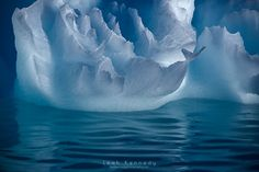 Portrait of an Iceberg - A whale tale emerges from the ice in Antarctica. Photography by  Leah Kennedy