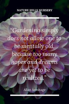 garden quotes Gardening simply does not allow one to be mentally old, because too many hopes and dreams are yet to be realized. Garden Works, Love Garden, Gardening For Beginners, Gardening Tips, Gardening Vegetables, Online Plant Nursery, Buy Plants Online, Garden Journal, Garden Quotes