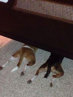 deux-chiens-lit