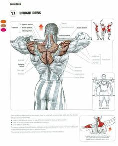 Upright Rows..