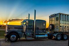 Peterbilt 389, Peterbilt Trucks, Show Trucks, Big Trucks, Road Train, Cattle, Rigs, Nascar, Trailers