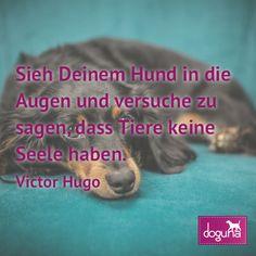 Sieh Deinem Hund in die Augen und versuche zu sagen dass Tiere keine Seele haben. (Victor Hugo) #hund #hunde #dog #dogs #dogsofinstagram #love #beautiful #instadog #ilovemydog #doglover #dogoftheday #doggy #dogstagram #hamburg #germany #deutschland #weisheiten #lovedogs #doglove #zitate #fb