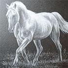 Видео урок рисования лошади