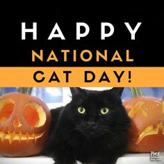 Check out these 9 fun facts about the superstition around black cats in honor of ! National Cat Day, National Holidays, Black Cats, Fun Facts, Halloween, Check, Happy, Everyday Holidays, Ser Feliz