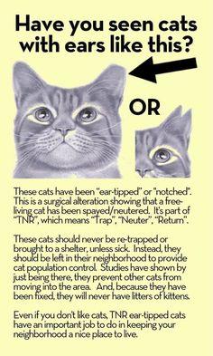 TNR/Feral cats