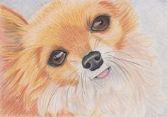 Coloured pencil on Bristol board by Lisa