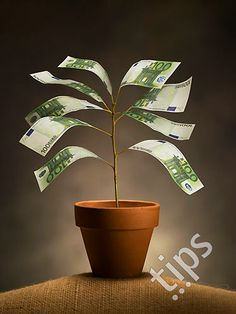 Plant of banknotes