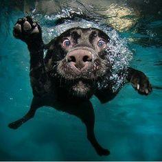 Cani sott'acqua | Trip For Dog