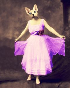 "Cat Art, Collage, Anthropomorphic, Animal Photography, Decorative, Print, Vintage, Creepy, Surreal, Neon, 8 x 10, ""Blanche's New Dress"""