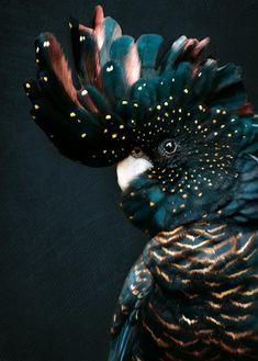 Pretty Birds, Beautiful Birds, Animals Beautiful, Animals And Pets, Baby Animals, Cute Animals, Polo Norte, Polo Sul, Animal Wallpaper